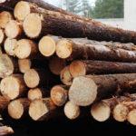 Строительство из дерева